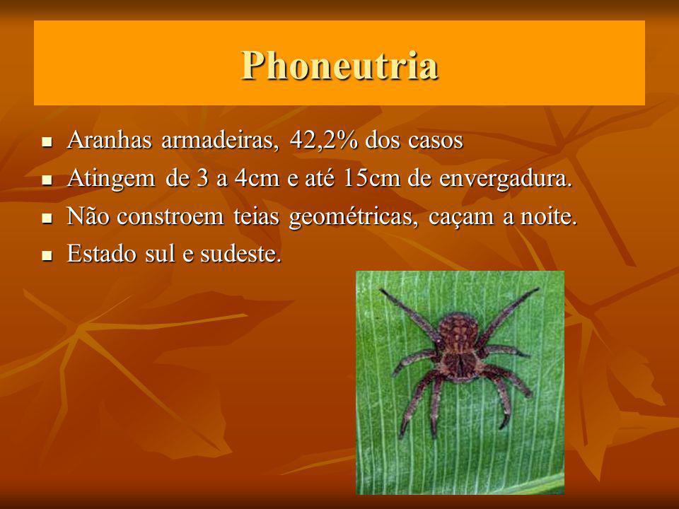 Phoneutria Aranhas armadeiras, 42,2% dos casos