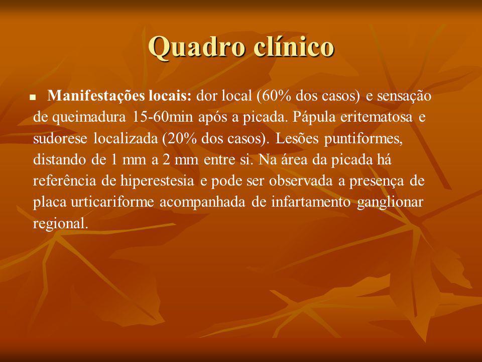 Quadro clínico Manifestações locais: dor local (60% dos casos) e sensação. de queimadura 15-60min após a picada. Pápula eritematosa e.