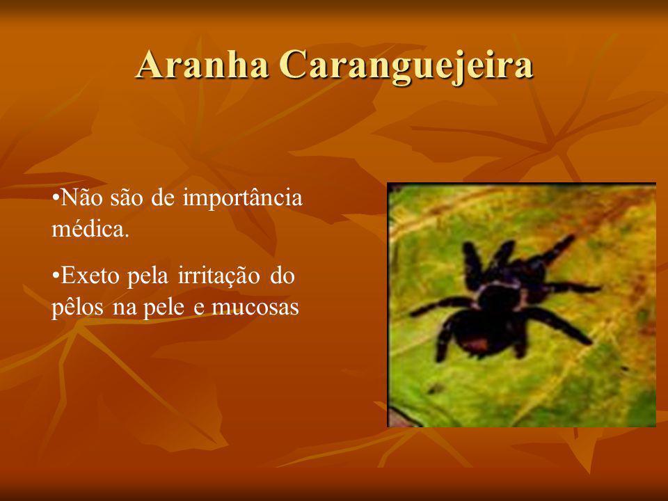 Aranha Caranguejeira Não são de importância médica.