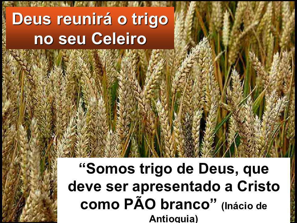 Deus reunirá o trigo no seu Celeiro