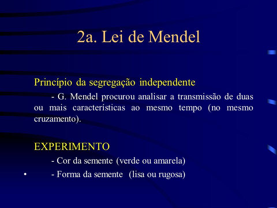 2a. Lei de Mendel Princípio da segregação independente