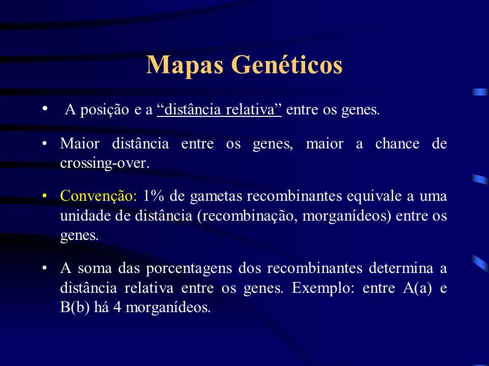 Mapas Genéticos A posição e a distância relativa entre os genes.