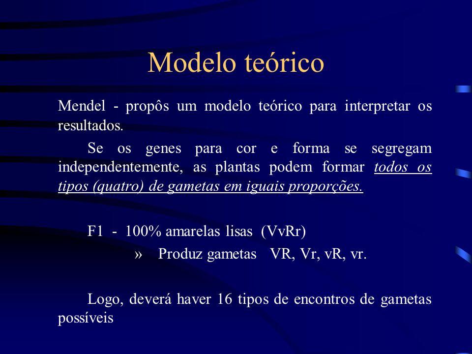 Modelo teórico Mendel - propôs um modelo teórico para interpretar os resultados.