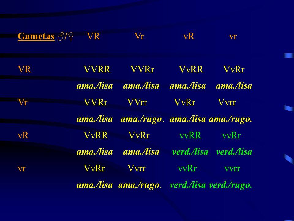 Gametas ♂/♀ VR Vr vR vr VR VVRR VVRr VvRR VvRr.