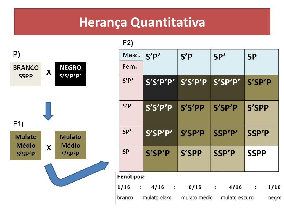 Herança Quantitativa S'P' S'P SP' SP S'S'P'P' S'S'P'P S'SP'P' S'SP'P