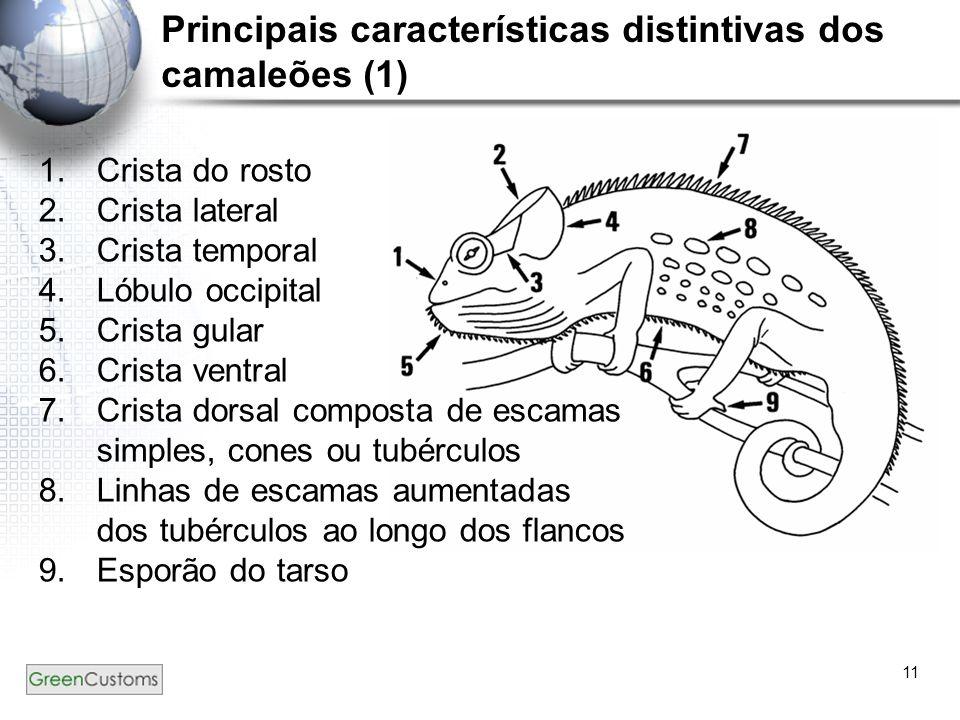 Principais características distintivas dos camaleões (1)