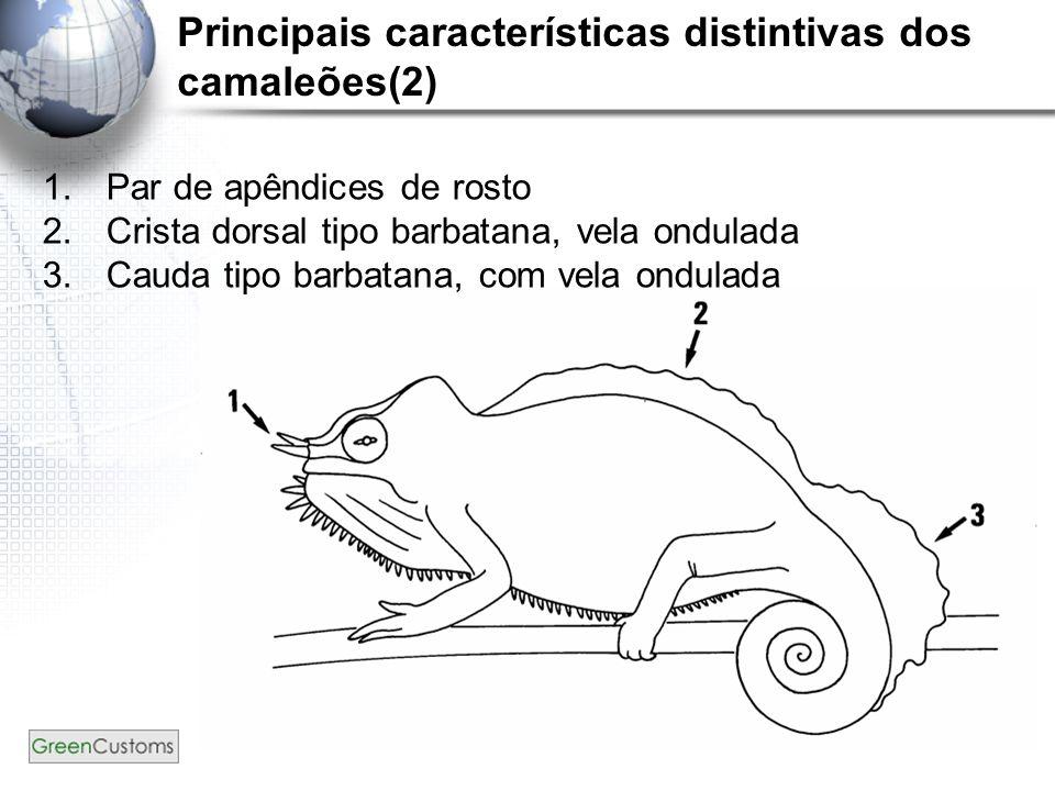 Principais características distintivas dos camaleões(2)
