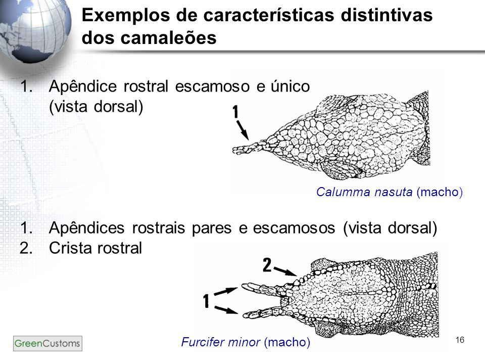Exemplos de características distintivas dos camaleões
