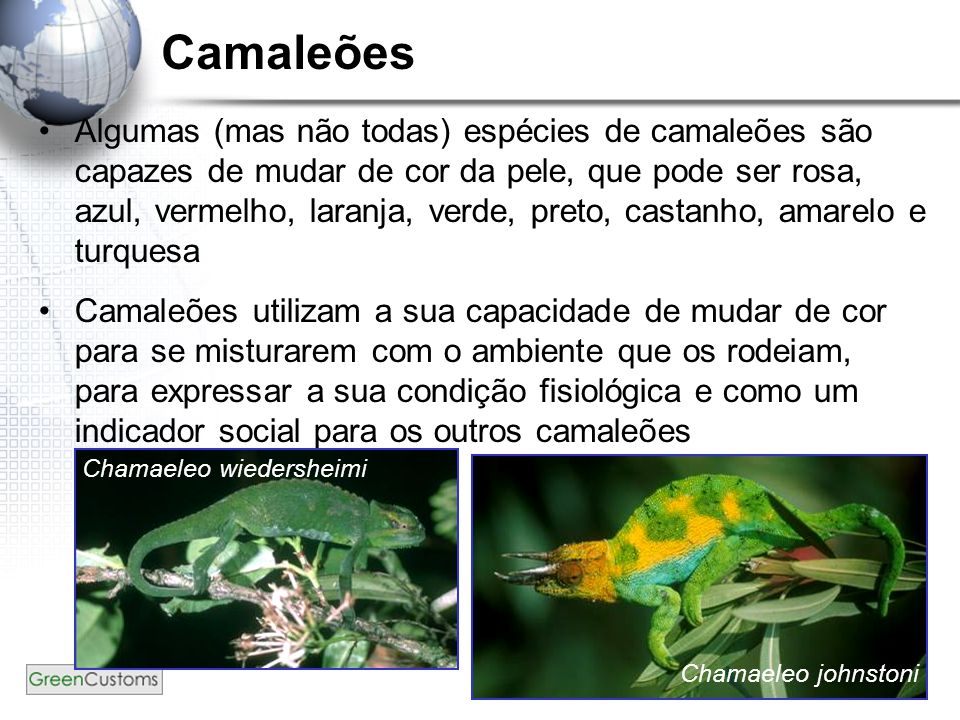 Camaleões