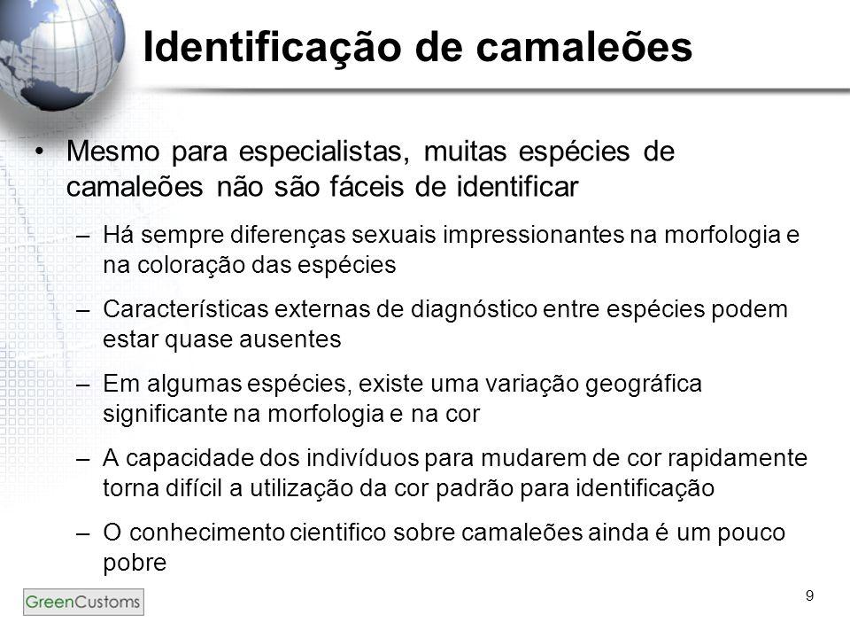Identificação de camaleões