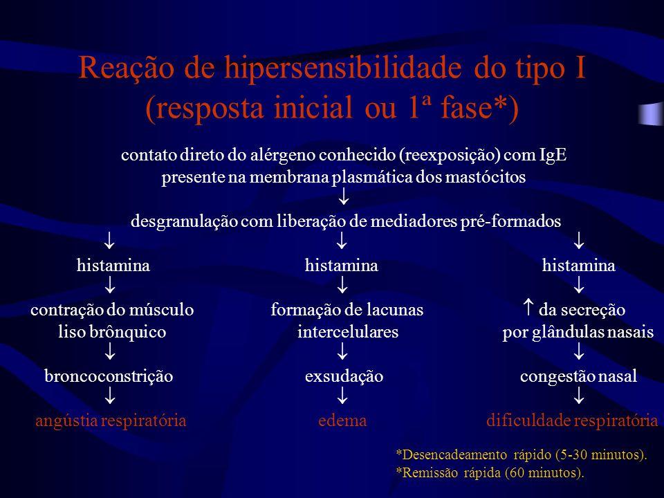 Reação de hipersensibilidade do tipo I (resposta inicial ou 1ª fase*)