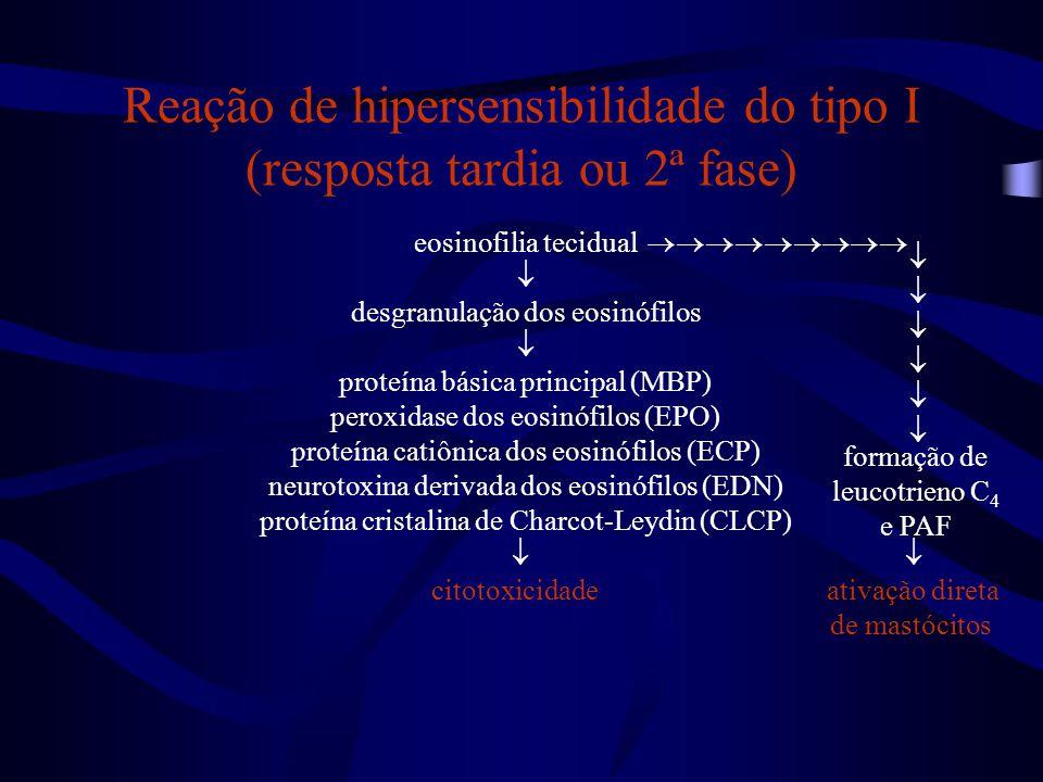 Reação de hipersensibilidade do tipo I (resposta tardia ou 2ª fase)