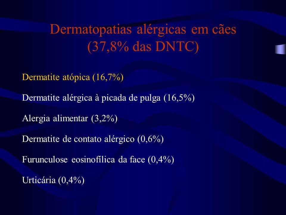 Dermatopatias alérgicas em cães (37,8% das DNTC)
