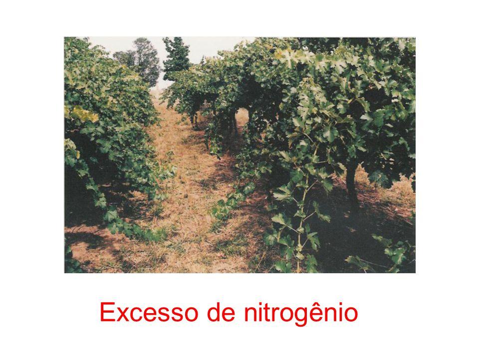 Excesso de nitrogênio 26