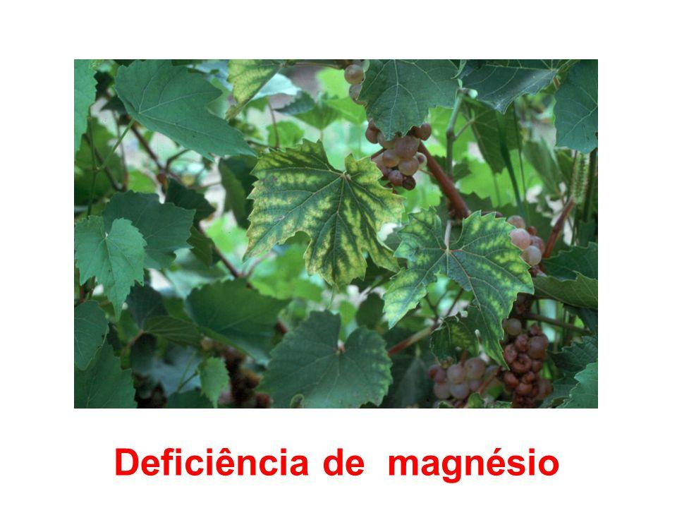 Deficiência de magnésio