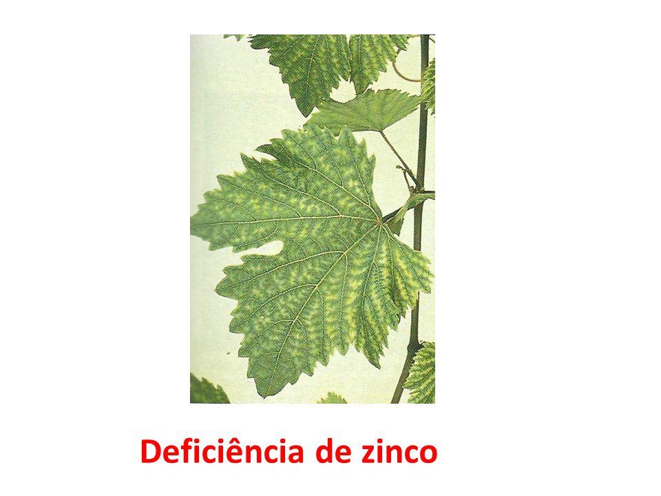 Deficiência de zinco 34