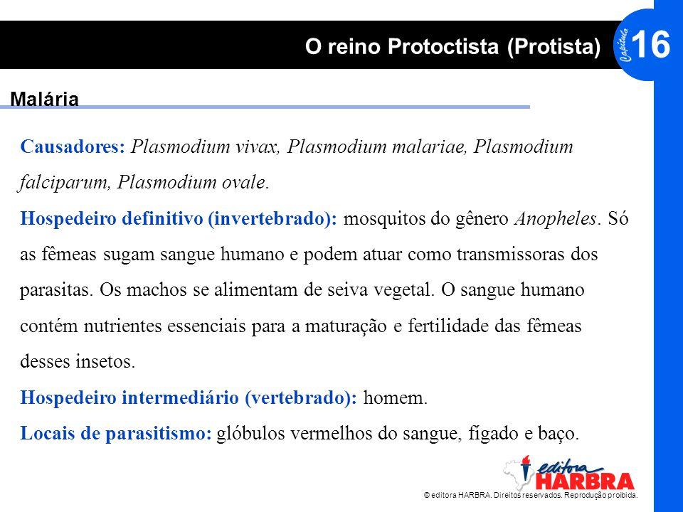 Malária Causadores: Plasmodium vivax, Plasmodium malariae, Plasmodium. falciparum, Plasmodium ovale.