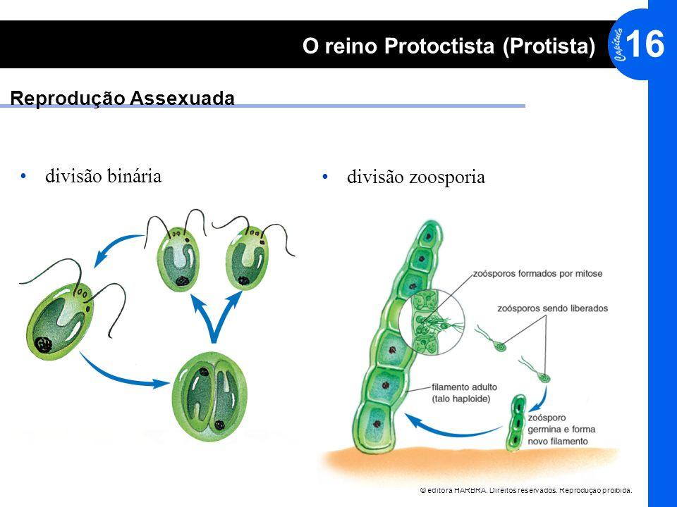 Reprodução Assexuada divisão binária divisão zoosporia