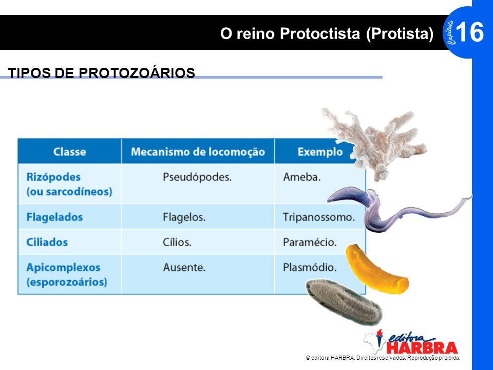 TIPOS DE PROTOZOÁRIOS