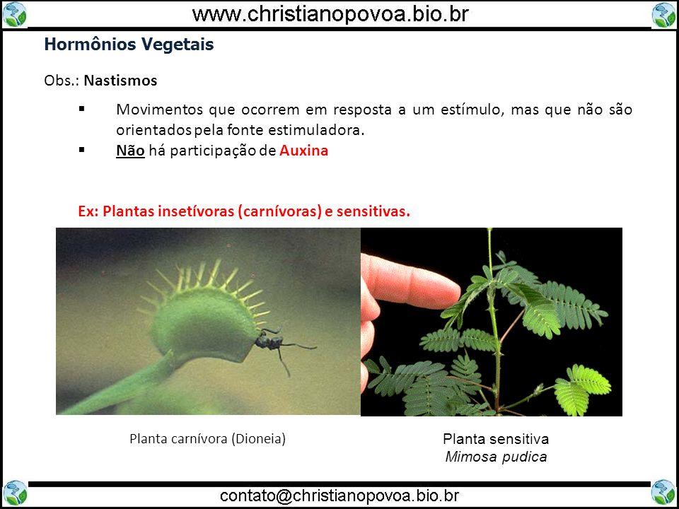 Planta carnívora (Dioneia)