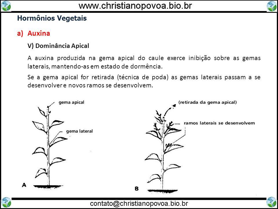 Auxina Hormônios Vegetais V) Dominância Apical