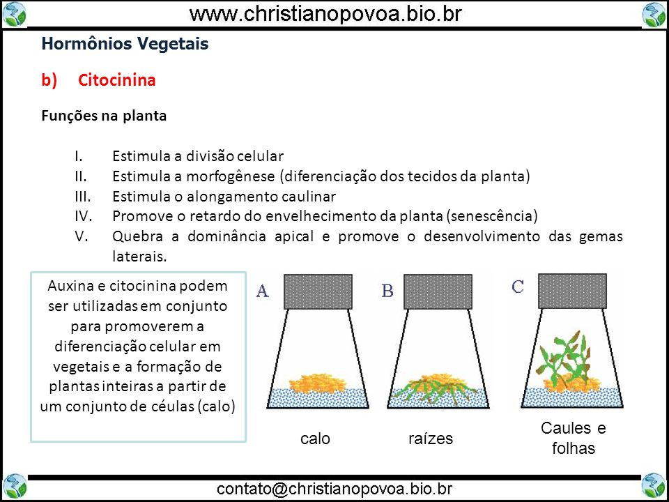 b) Citocinina Hormônios Vegetais Funções na planta