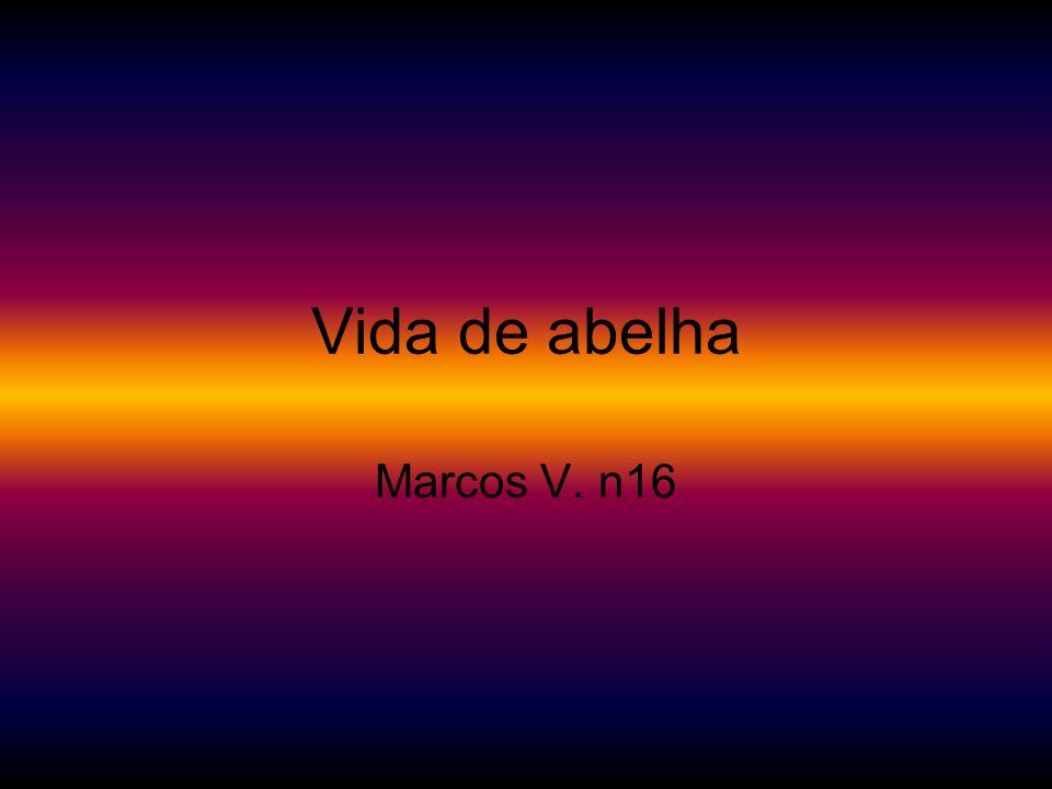 Vida de abelha Marcos V. n16