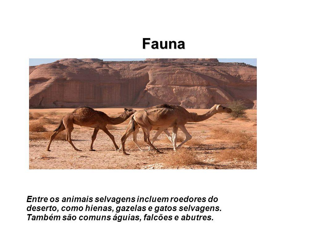 Fauna Entre os animais selvagens incluem roedores do deserto, como hienas, gazelas e gatos selvagens.