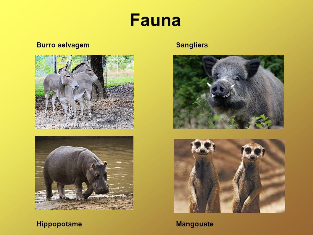 Fauna Burro selvagem Sangliers Hippopotame Mangouste