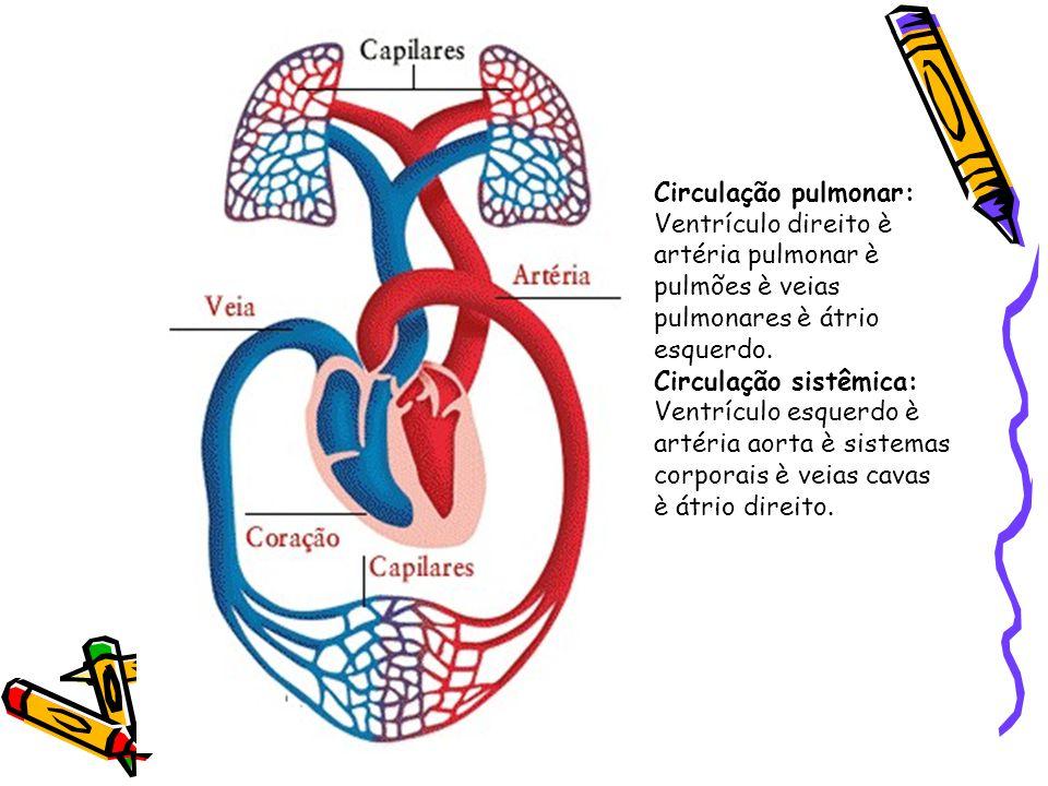 Circulação pulmonar: Ventrículo direito è artéria pulmonar è pulmões è veias pulmonares è átrio esquerdo.