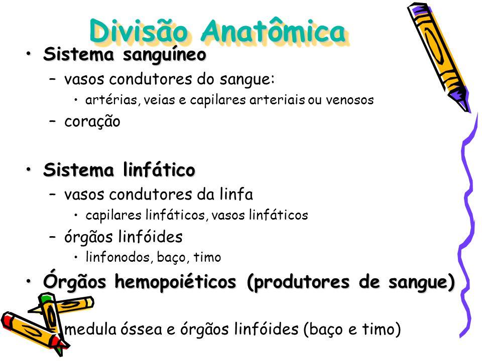 Divisão Anatômica Sistema sanguíneo Sistema linfático