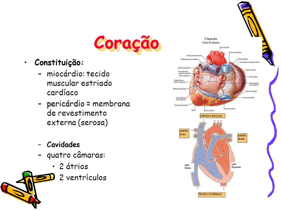 Coração Constituição: miocárdio: tecido muscular estriado cardíaco