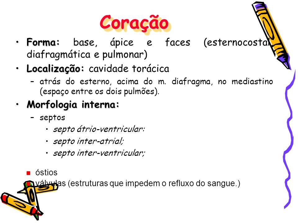 Coração Forma: base, ápice e faces (esternocostal, diafragmática e pulmonar) Localização: cavidade torácica.