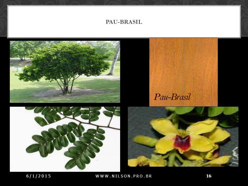 Pau-brasil 07/04/2017 www.nilson.pro.br