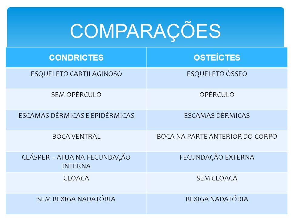 COMPARAÇÕES CONDRICTES OSTEÍCTES ESQUELETO CARTILAGINOSO