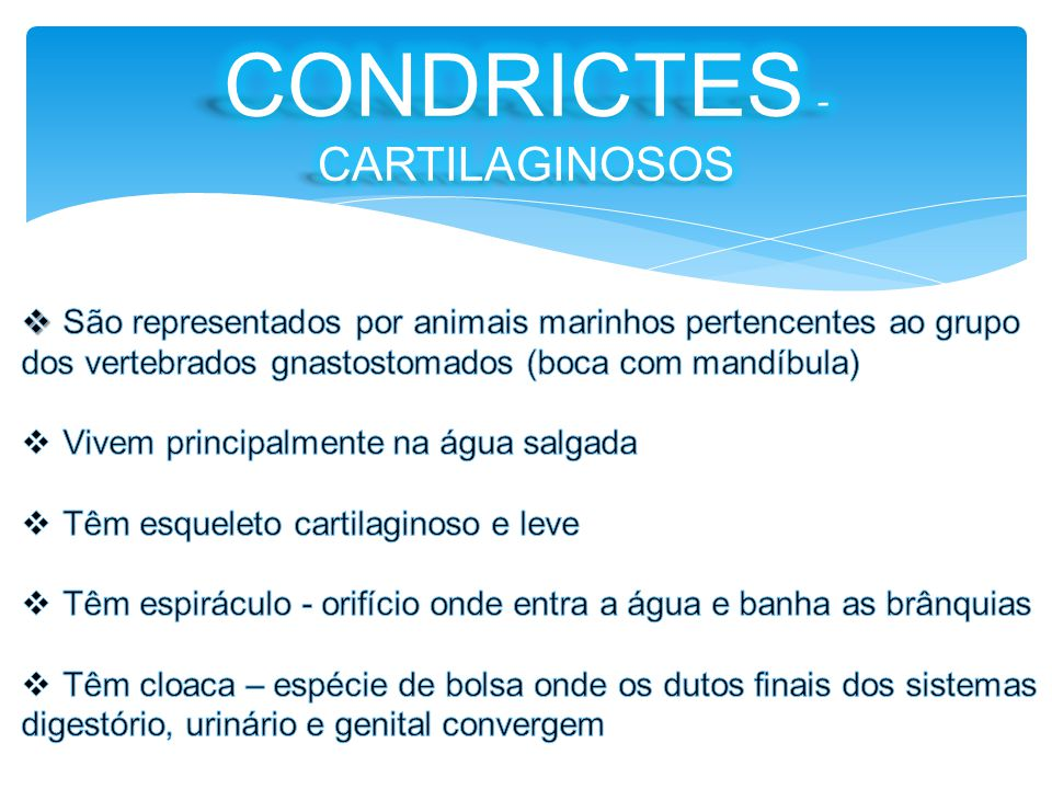 CONDRICTES - CARTILAGINOSOS
