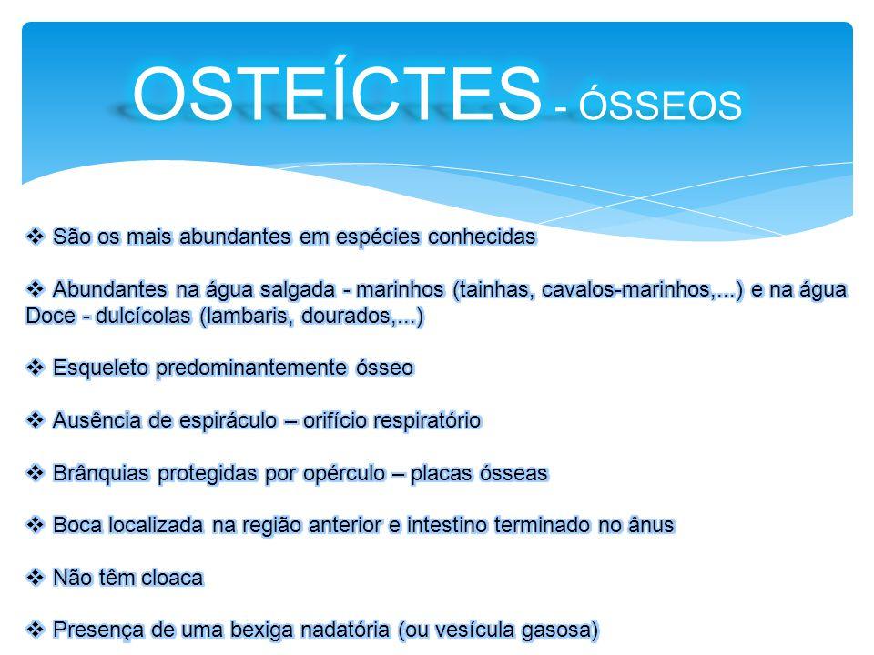 OSTEÍCTES - ÓSSEOS São os mais abundantes em espécies conhecidas