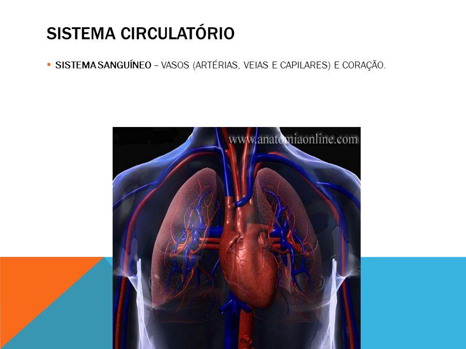 SISTEMA CIRCULATÓRIO SISTEMA SANGUÍNEO – VASOS (ARTÉRIAS, VEIAS E CAPILARES) E CORAÇÃO.