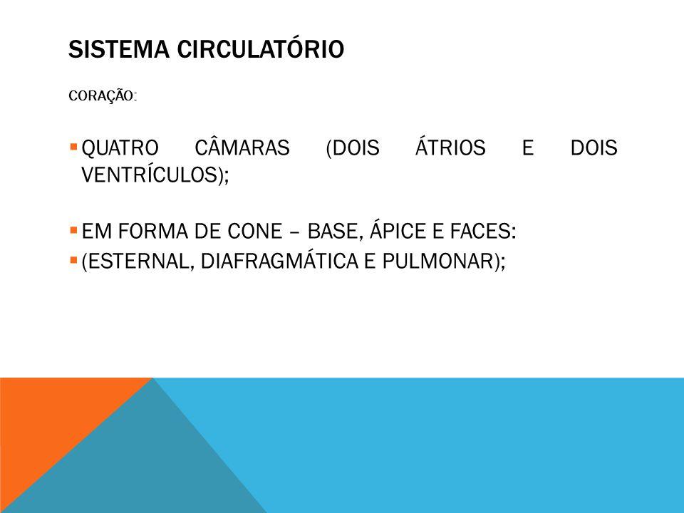 SISTEMA CIRCULATÓRIO QUATRO CÂMARAS (DOIS ÁTRIOS E DOIS VENTRÍCULOS);