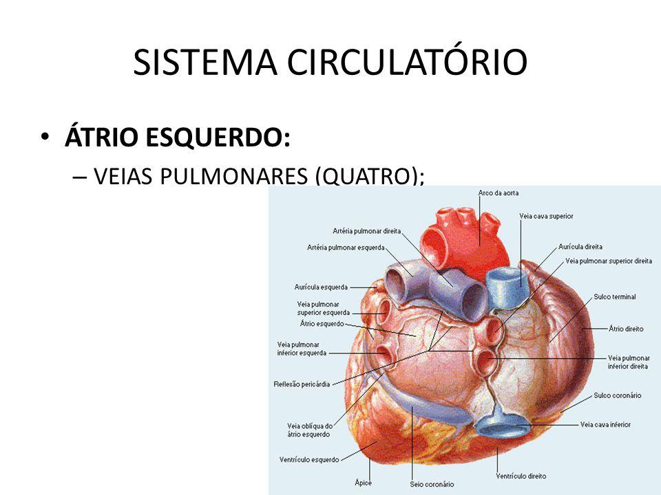 SISTEMA CIRCULATÓRIO ÁTRIO ESQUERDO: VEIAS PULMONARES (QUATRO);
