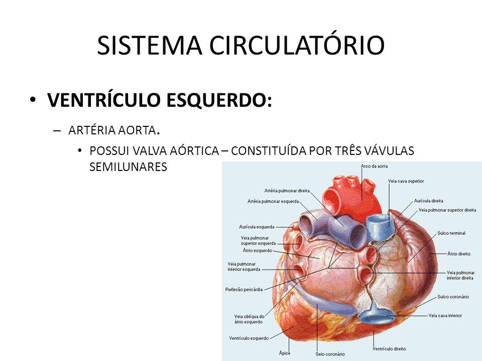 SISTEMA CIRCULATÓRIO VENTRÍCULO ESQUERDO: ARTÉRIA AORTA.