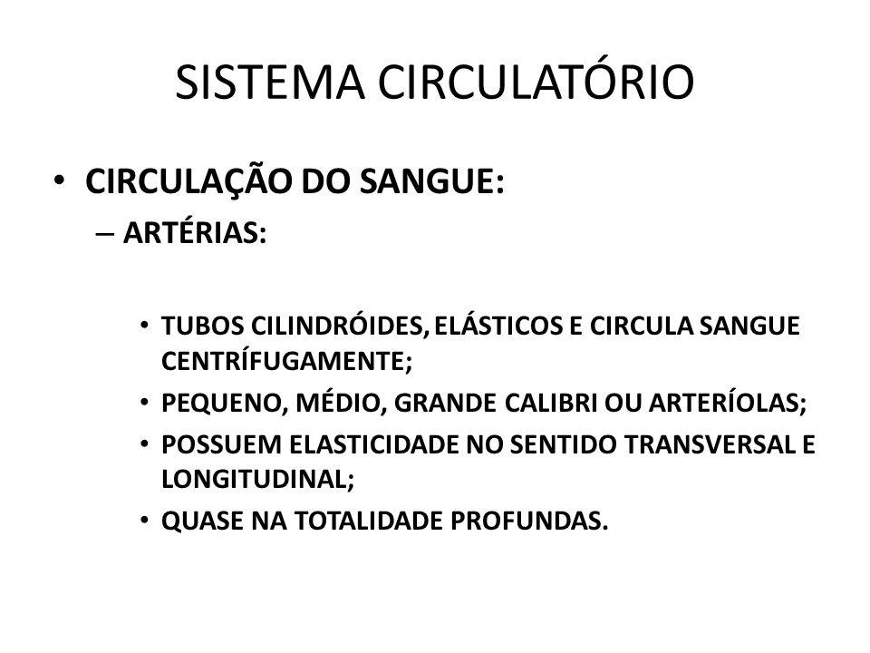 SISTEMA CIRCULATÓRIO CIRCULAÇÃO DO SANGUE: ARTÉRIAS: