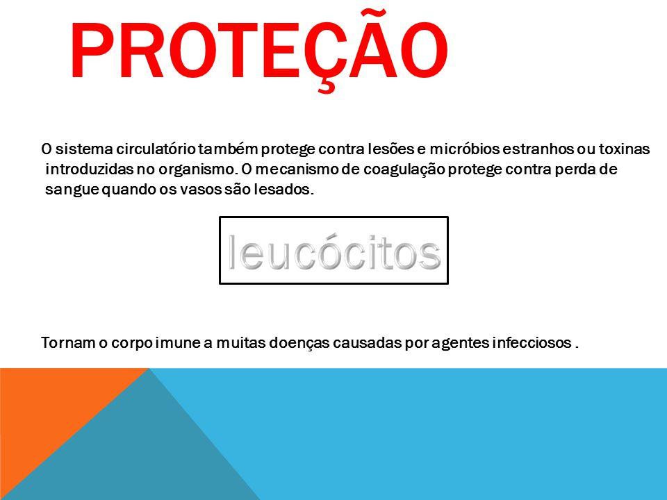Proteção O sistema circulatório também protege contra lesões e micróbios estranhos ou toxinas.