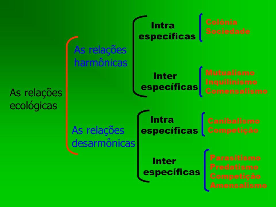 As relações harmônicas As relações ecológicas As relações desarmônicas