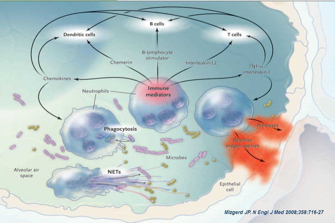 Quando os microorganismos invadem o pulmão, a fagocitose e as armadilhas extracelulares de neutrófilos matam as bactérias. Mas os neutrófilos também geram uma variedade de mediadores que vão dirigir a resposta imune, influenciando outras células dos sistema inato e adaptativo. Finalmente, os neutrófilos danificam os tecidos, com os produtos tais como proteases e espécies reativas de oxigênio.