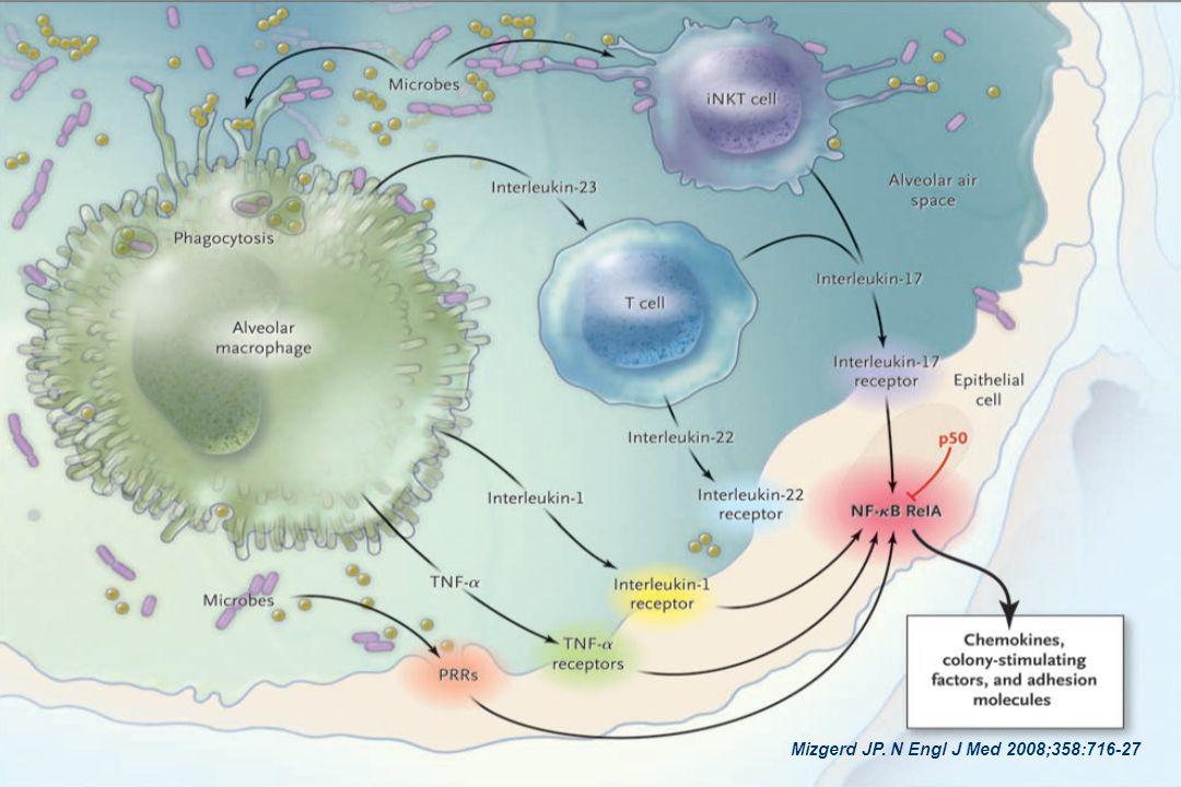 A ativação das células epiteliais formam uma interface entre o espaço aéreo e o organismo, induzindo a expressão de moléculas que recrutam mais neutrófilos como reforço da imunidade inata. As células epiteliais reconhecem alguns microorganismos diretamente através dos receptores de reconhecimento padrão (PRRs). Os macrófagos reconhecendo a existência de microorganismo ativam as céls.epiteliais diretamente e através das céls.T. As células NK reconhecendo os microorganismo também ativam as células epiteliais. Todas estas vias de ativação convertem para o fator Kapa beta de transcrição nuclear nas células epiteliais, responsáveis por induzir e regular a expressão de mediadores pró inflamatórios, incluindo citocinas neutrofílicas, fatores estimulantes de colônias e moléculas de adesão.