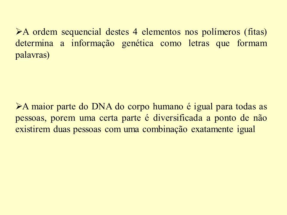 A ordem sequencial destes 4 elementos nos polímeros (fitas) determina a informação genética como letras que formam palavras)