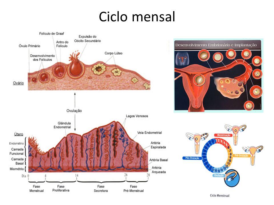 Ciclo mensal