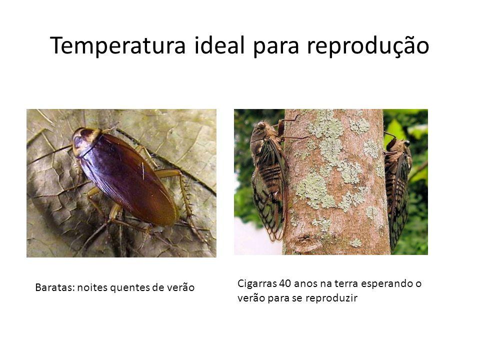 Temperatura ideal para reprodução