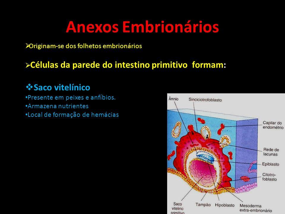 Anexos Embrionários Saco vitelínico